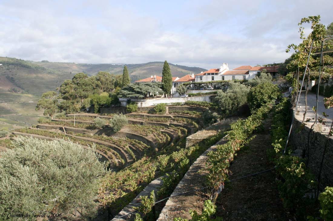 Vignes de Quinta do Noval